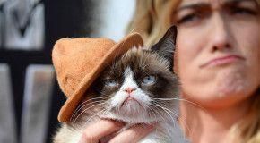 «Сердитый котик» заработал 100 миллионов долларов