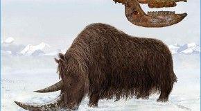 В Якутии жили шерстистые носороги