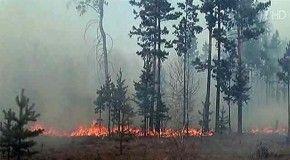 В Сибири за сутки площадь лесных пожаров возросла в четыре раза