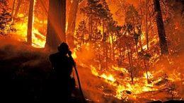 В США гасят лесной пожар