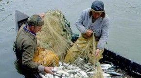 В Мурманской области любительской рыбалкой прикрываются браконьеры